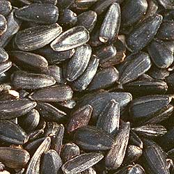 black_oil sunflower bird seed