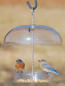 Dome bird Feeder