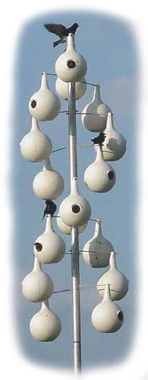 pole mounted gourds