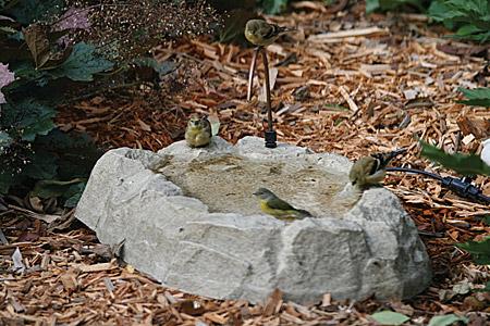 in ground birdbath