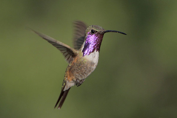 Frequently Asked Questions About Hummingbirds Autos Post Make Your Own Beautiful  HD Wallpapers, Images Over 1000+ [ralydesign.ml]