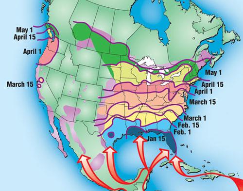 purple martin arrival map
