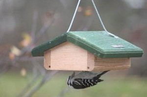 Upside down suet feeder
